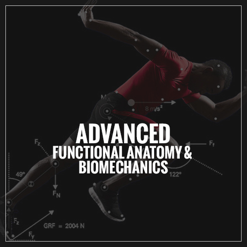 Advanced Functional Anatomy Biomechanics Mindsetting The Rings In